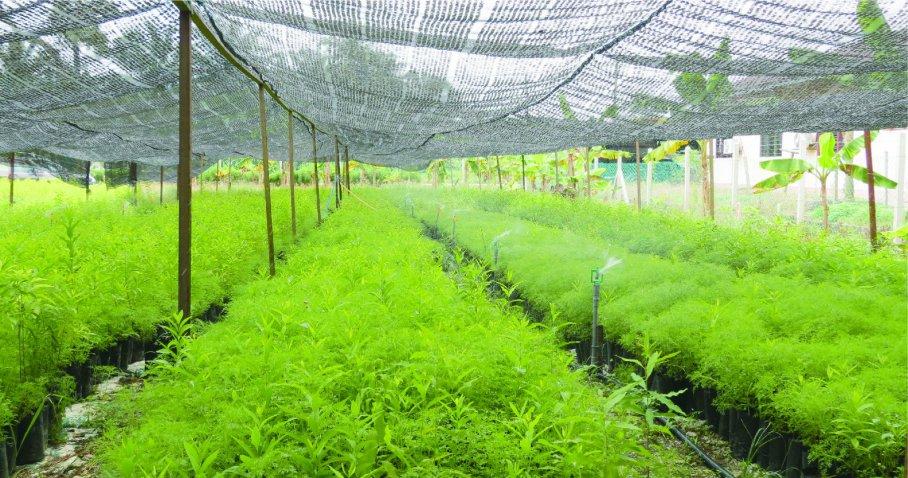 The Green Venture